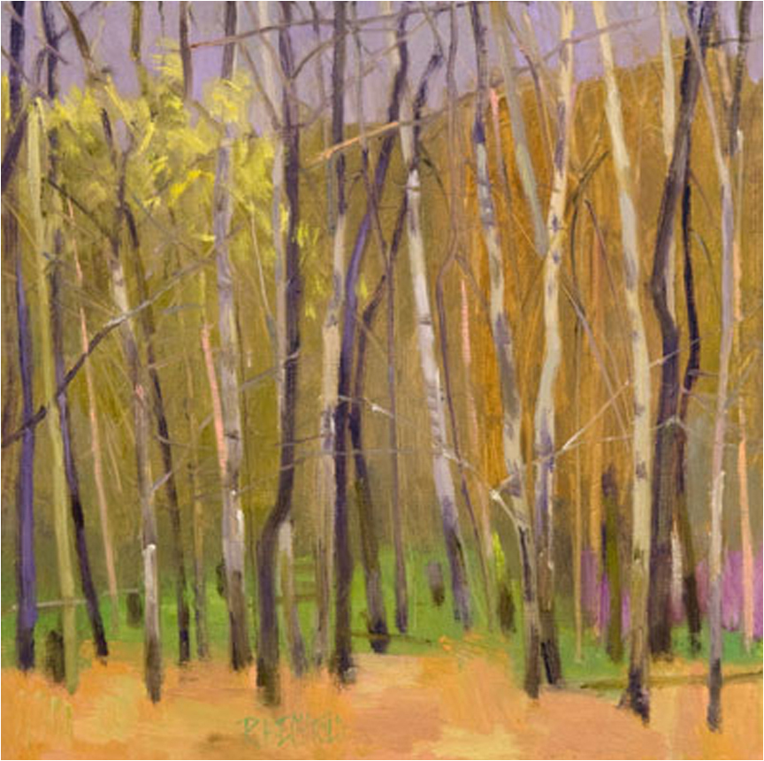 Birches Here And There  24″ X 24″